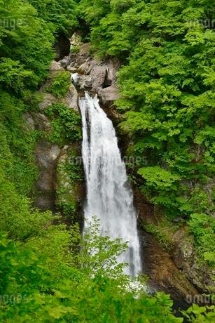 秋保大滝の写真素材 [FYI01720271]