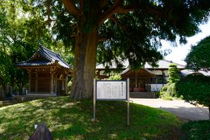東源寺の榧ノ木と案内板の写真素材 [FYI01720356]