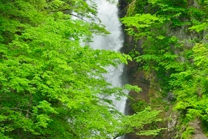 秋保大滝と新緑の写真素材 [FYI01720430]