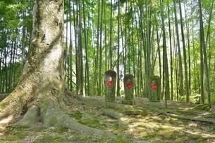 お地蔵様と竹林の写真素材 [FYI01720444]