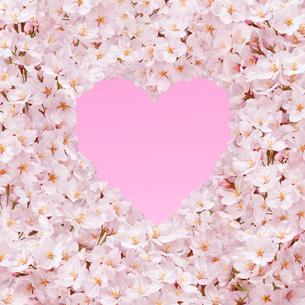 桜の花の枠 ハートの写真素材 [FYI01720899]