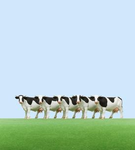 牧場の牛 ミニチュアの写真素材 [FYI01721526]