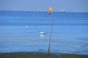 牛込海岸潮干狩場の写真素材 [FYI01721740]
