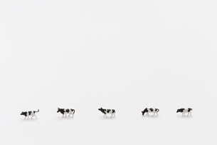 牛 ミニチュアの写真素材 [FYI01722806]