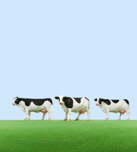 牧場の牛 ミニチュアの写真素材 [FYI01723414]