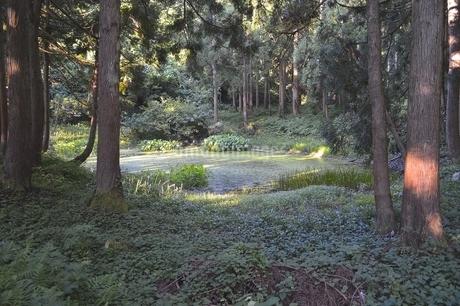 郡殿の池の写真素材 [FYI01723790]
