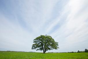 大木と草原の写真素材 [FYI01724351]