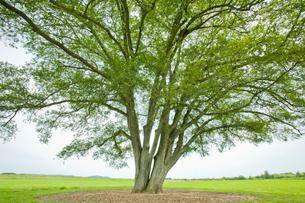 大木の写真素材 [FYI01724426]