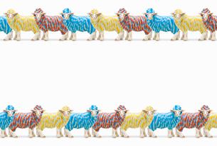 カラフルな毛糸のひつじのフィギュアの写真素材 [FYI01724800]