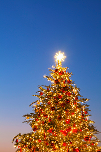 クリスマスツリーの写真素材 [FYI01724869]