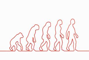 一本の紐でつくった類人猿の進化の写真素材 [FYI01724885]