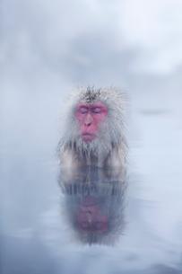 地獄谷の温泉につかるサルの写真素材 [FYI01724894]