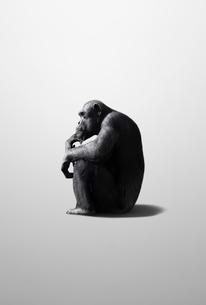 考えるチンパンジーの写真素材 [FYI01725068]