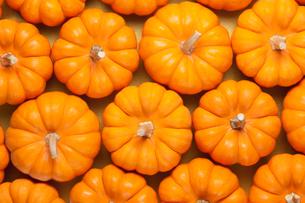 ハロウィンのかぼちゃの写真素材 [FYI01725389]