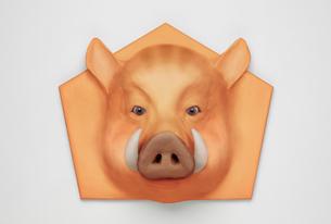 イノシシ亥の顔 イメージの写真素材 [FYI01725499]