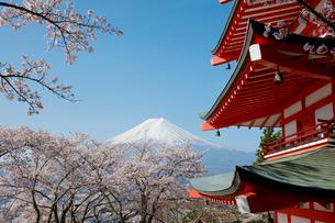 新倉山浅間公園より望む五重塔とサクラと富士山の写真素材 [FYI01725873]