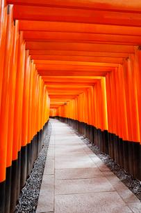 伏見稲荷大社の千本鳥居の写真素材 [FYI01725911]