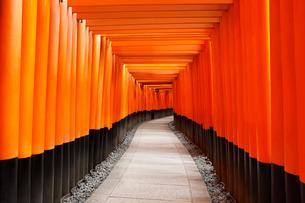 伏見稲荷大社の千本鳥居の写真素材 [FYI01725920]