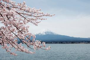 富士山とサクラの写真素材 [FYI01725951]