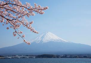 河口湖湖畔からの桜と富士山の写真素材 [FYI01725977]