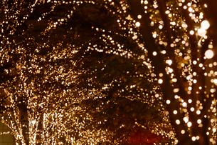 東京丸の内の街路樹のイルミネーションの写真素材 [FYI01726015]