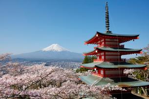 新倉山浅間公園より望む五重塔とサクラと富士山の写真素材 [FYI01726029]