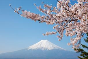 サクラと富士山の写真素材 [FYI01726096]