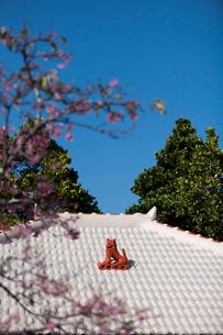屋根上にいるシーサーの写真素材 [FYI01726167]