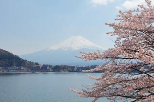 河口湖湖畔からの桜と富士山の写真素材 [FYI01726417]