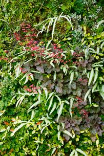 多様な植物の背景の写真素材 [FYI01726486]