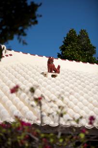 屋根上にいるシーサーの写真素材 [FYI01726504]