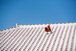 屋根上にいるシーサーの写真素材 [FYI01726547]