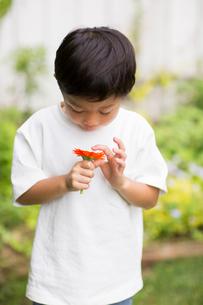 庭で花を観察する子供の写真素材 [FYI01726586]