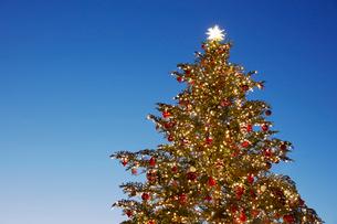 クリスマスツリーの写真素材 [FYI01726596]