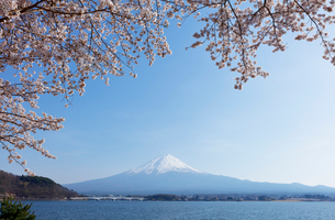 河口湖湖畔からの桜と富士山の写真素材 [FYI01726605]