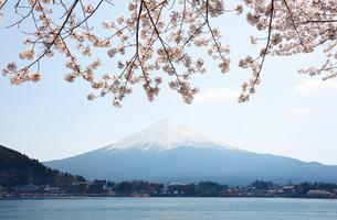 河口湖湖畔からの桜と富士山の写真素材 [FYI01726659]
