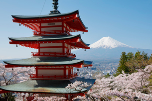新倉山浅間公園より望む五重塔とサクラと富士山の写真素材 [FYI01726666]