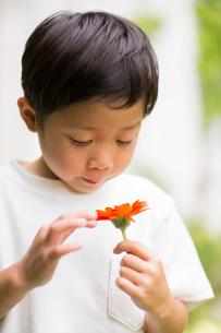 庭で花を観察する子供の写真素材 [FYI01726706]