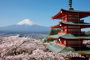 新倉山浅間公園より望む五重塔とサクラと富士山の写真素材 [FYI01726716]