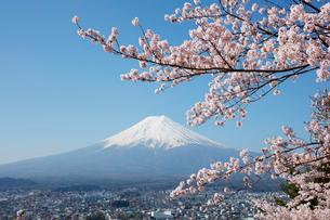 サクラと富士山の写真素材 [FYI01726742]