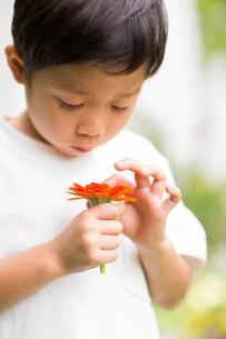 庭で花を観察する子供の写真素材 [FYI01726745]