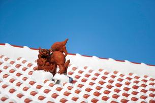 屋根上にいるシーサーの写真素材 [FYI01726811]