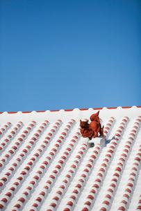 屋根上にいるシーサーの写真素材 [FYI01726880]