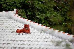 屋根上にいるシーサーの写真素材 [FYI01726897]