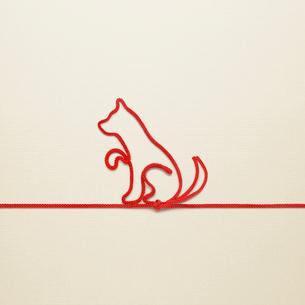 赤い紐でつくった犬(戌)のイメージの写真素材 [FYI01726898]
