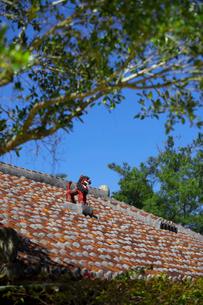 屋根上にいるシーサーの写真素材 [FYI01727253]