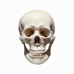 頭蓋骨の写真素材 [FYI01727372]