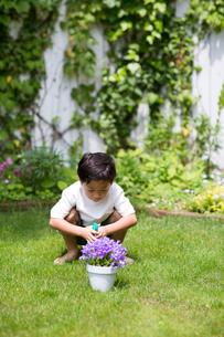 庭で鉢植えの花にスプレーする子供の写真素材 [FYI01727415]