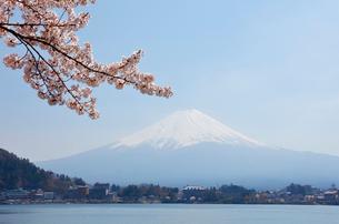 河口湖湖畔からの桜と富士山の写真素材 [FYI01727474]