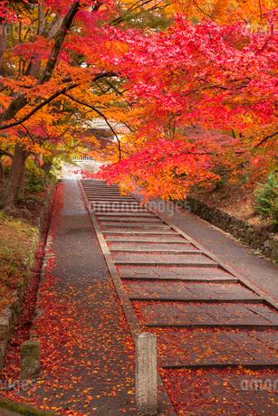 毘沙門堂の紅葉の写真素材 [FYI01727797]